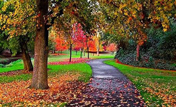 image of path in autumn