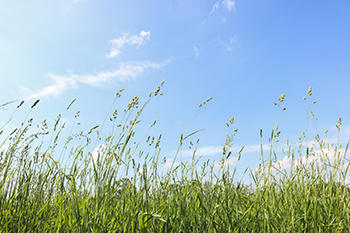 image of grass and sky