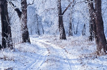 image of snowy woods